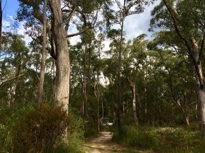 NP path w campervan